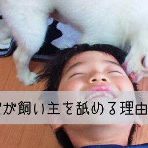 犬が飼い主を舐める理由。その心理とは?