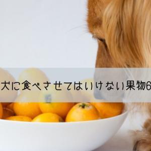 絶対犬に食べさせてはいけない果物6つ!