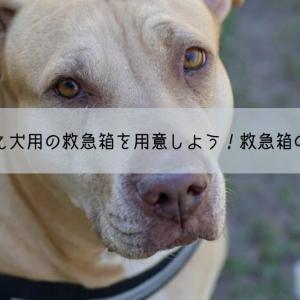 緊急時に備え犬用の救急箱を用意しよう!ペット用救急箱の中身12選!