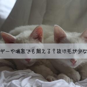猫アレルギーや喘息でも飼えるかも?飼いやすい抜け毛が少ない猫の種類10選