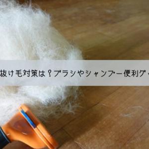 一番効果のある犬の抜け毛対策は?ブラッシングやシャンプー便利グッズや掃除のコツ
