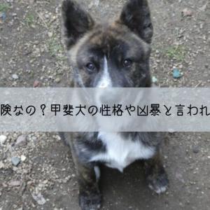 日本犬の甲斐犬は危険なの?甲斐犬の性格や凶暴と言われている理由