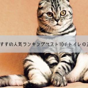 猫のトイレおすすめ人気ランキングベスト10!トイレトレーの正しい選び方