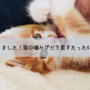 猫の噛みグセを直すたった4つの方法。私も実践しました!