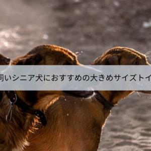 大型犬や多頭飼い、シニア犬におすすめの大きめサイズトイレシーツ10選