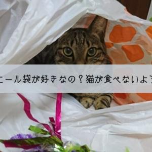 なぜ猫はビニール袋が大好きなのか?ビニールを猫が食べないようにする対策