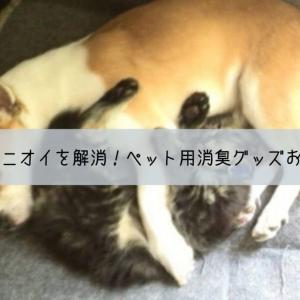 犬猫の気になるニオイを解消!ペット用消臭グッズおすすめ10選。用途別に紹介