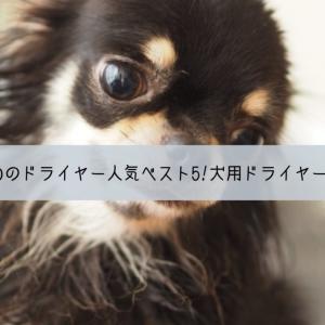犬におすすめのドライヤー人気ランキングベスト5!犬用ドライヤーの必要性