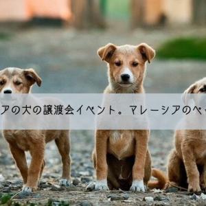 【海外の譲渡会】マレーシアの犬の譲渡会イベント。マレーシアのペット事情