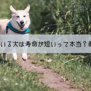 外で飼っている犬は寿命が短いって本当?徹底検証