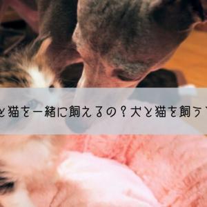 【実体験】犬と猫を一緒に飼えるの?犬と猫を飼うときの注意点