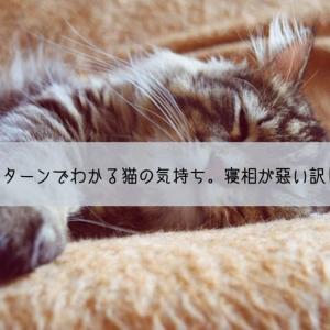 猫の寝相パターンでわかる猫の気持ち。寝相が悪い訳じゃないよ。