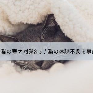 寒さが苦手な猫の寒さ対策3つ!猫の体調不良を事前に防ごう