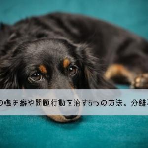 留守番中の犬の鳴き癖や問題行動を治す5つの方法。分離不安とは?