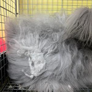 フェルト化した毛玉