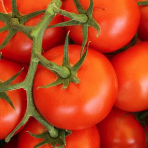トマトジュースの健康の良い点と悪い点