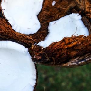 ココナッツの健康に良い点や悪い点を紹介