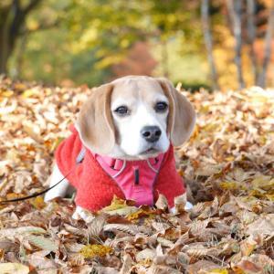 秋は好き?嫌い?