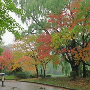 中島公園 雨の紅葉散歩