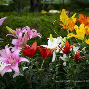 初夏に咲く(3)
