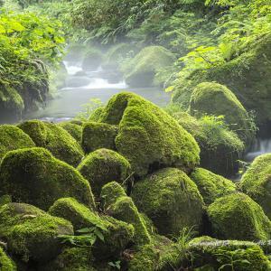苔生した渓流
