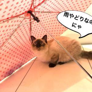 雨やどり*