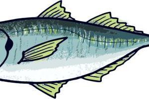 アジ釣り!サビキでショットガン釣法が好きです!