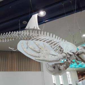 2019北海道車中泊の旅31日目【枝幸② 国内最大級シャチの骨格標本 】