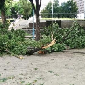 台風19号に備えて買い出し&庭の整理 in 千葉県