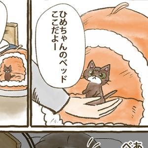 【第39話】子猫編③ 真夜中の襲撃
