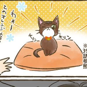 【第41話】子猫編⑤ 鈴付きの首輪