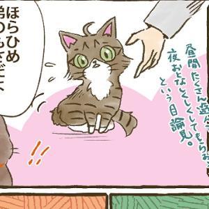 【第42話】子猫編⑥ 弟分がやってきた