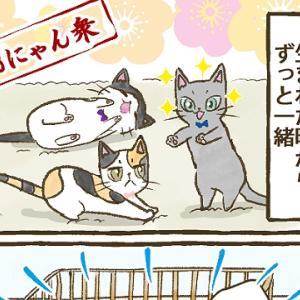 【第48話】子猫編⑫ 仲良し3にゃん衆