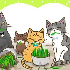 【第55話】土を使わない猫草を育てる