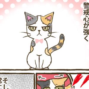 【第18話】四女びび