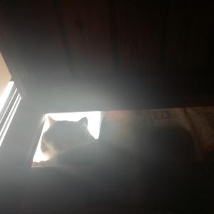 うちの猫はチュールを食べない
