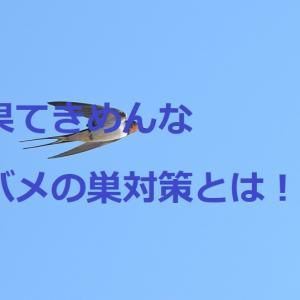 簡単で効果的なツバメの巣対策とは!?我が家がした対策を紹介します!