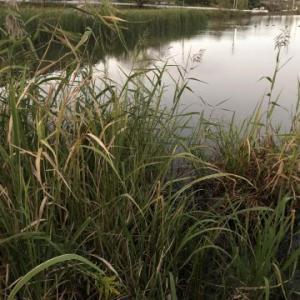 2019年10月14日 茨城県 栃木県 野池 大郷戸ダム ブラックバス釣り
