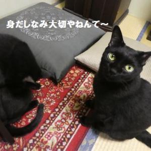 ひなたちゃんの、バッチこ~い! ☆ ナッちゃんの漲るパワー!