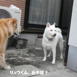 お相手サンキュ~!、負けへんで~ ☆ 威勢はいいんだけどね・・・