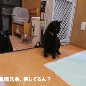 また怪奇な!ナッちゃん弾ける~ ☆ わんこDVD、マイ・コレクション!