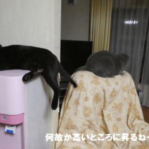 ひなたちゃんは、監視役! ☆ かくれんぼ、どっちが勝ち?