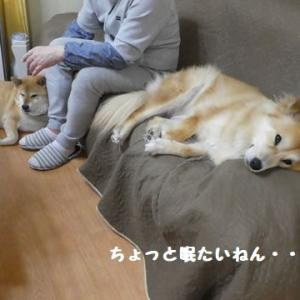 ちょっと眠たいねん・・・ ☆ どっちが勝ちやねん?