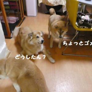 ウッソ~! ☆ いっぱい走って、お疲れ様!