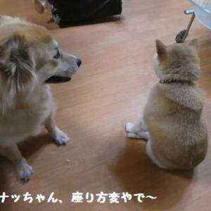 大好きなお友達(?)が来てくれたよ! ☆ ナッちゃん、座り方変やで~