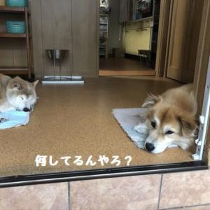 棚からぼた餅! ☆ 貴重な、直線コース~