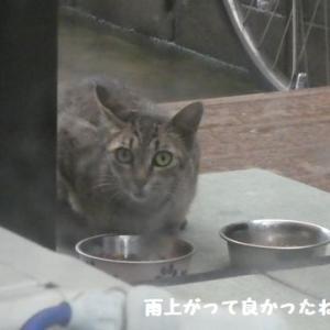 雨の中の、可愛い訪問者! ☆ 鍛えるナッちゃん~