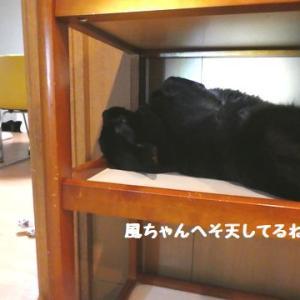 仲良くオネンネ~ ☆ 黒猫ちゃんって、どうしても上手く撮れないな!