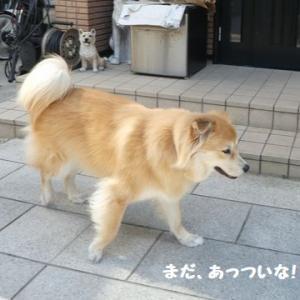 ナッちゃん、15歳の夏を走る~ ☆ 遊んだら、しっかりクールダウン!