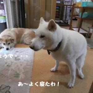 仲良しの輪は、ひなたちゃんから~ ☆ コリャ、無理だわ~